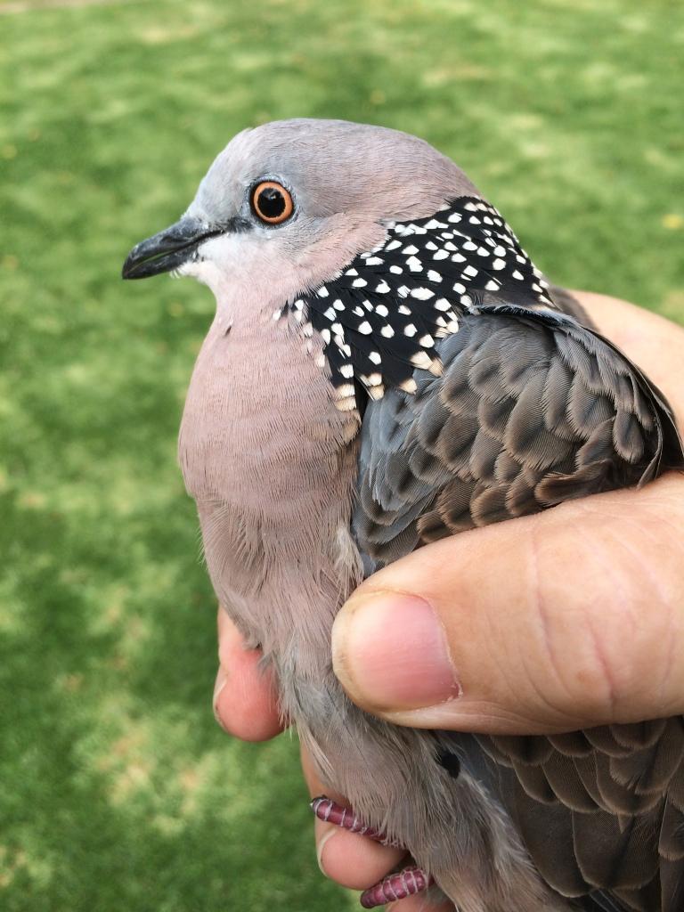 Bird Three