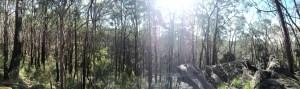 panorama reduced