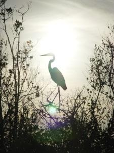 Heron_Sunset_by_riktorsashen