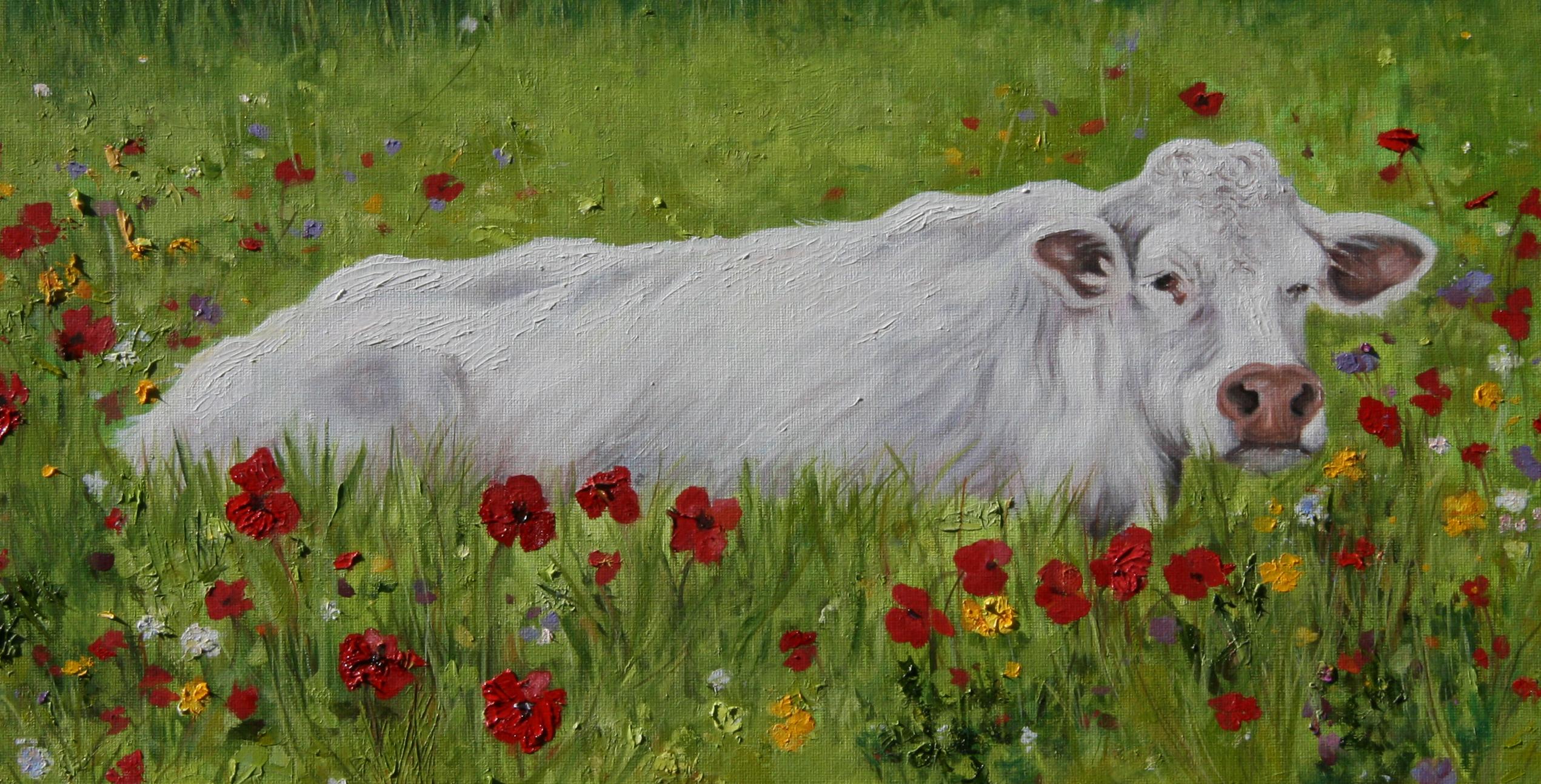 cow-in-poppy-fieldCROP