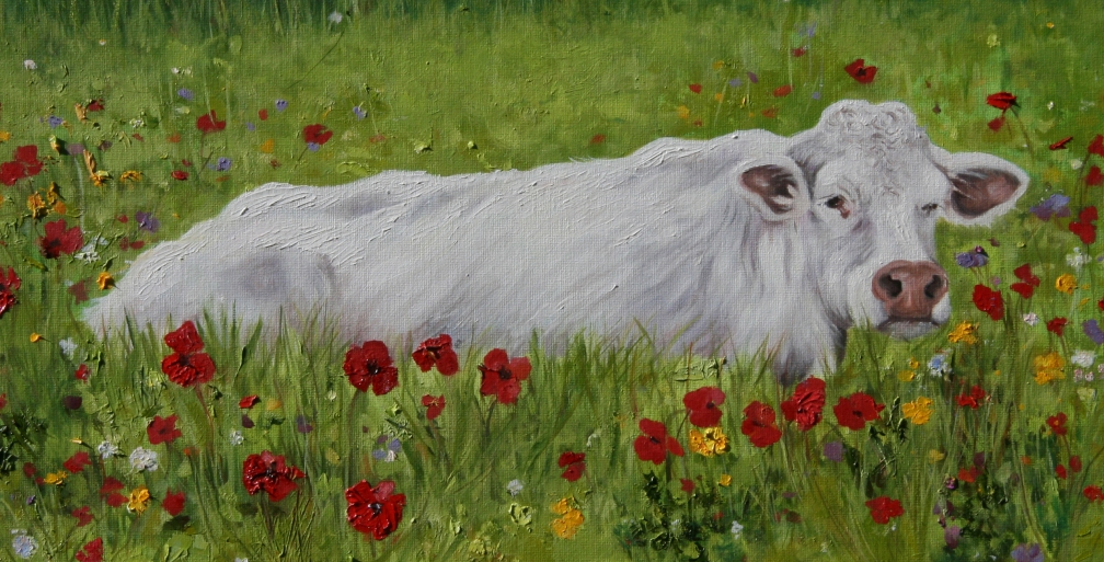 cow-in-poppy-fieldCROP