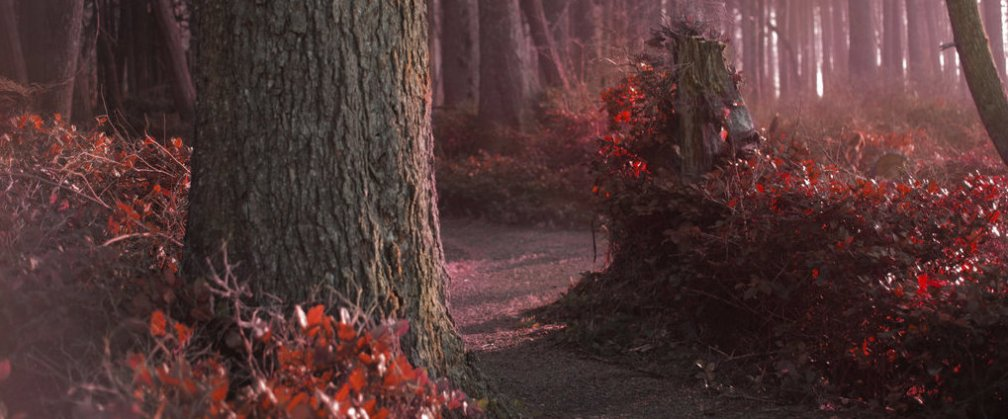 the_forest_whispers_sanguine_CROP