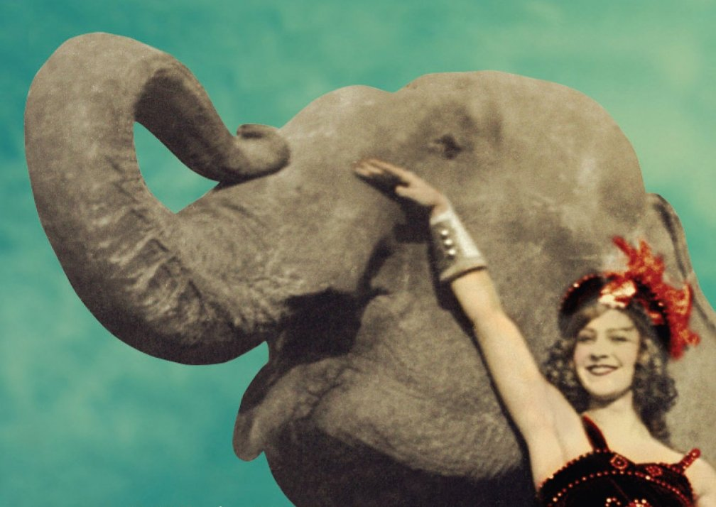 11 elephantwater