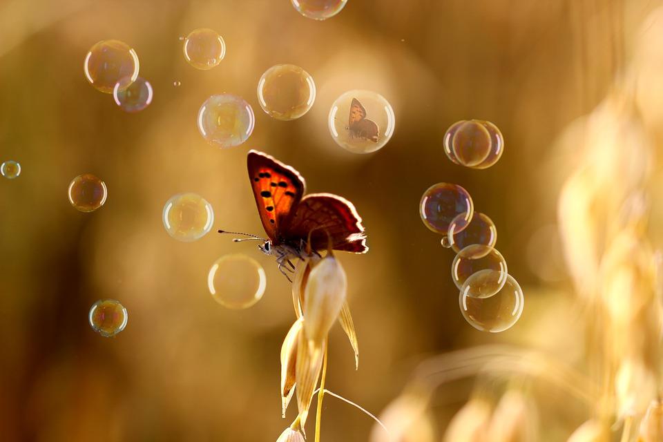 28 butterfly-3561191_960_720.jpg