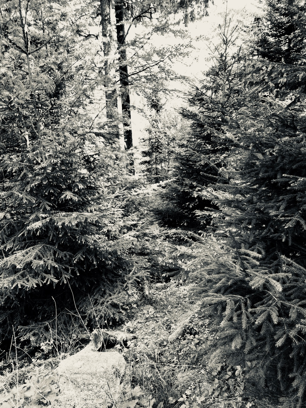 30b forest.JPG